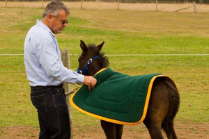 Don't get in a flap: Say 'neigh' to tarps and flags