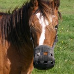 Effectiveness of grazing muzzles explored in US study