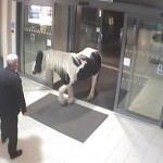 The horse enters the Winford Police Station.