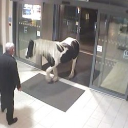 "Visit by a ""neigh-bour"": Horse enters British police station"
