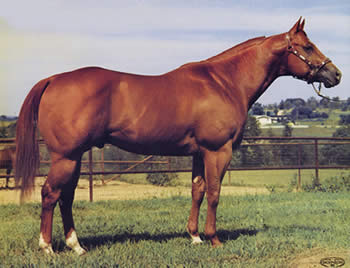 In 1992 HYPP was linked to the illustrious quarter horse sire Impressive.