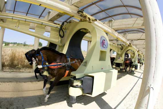 how to start training a racehorse