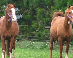 Preparing a foaling kit – are you ready?