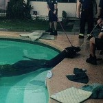 Firefighters were called to help a horse from a pool in Mesa, Arizona. Photo: Mesa Fire Department