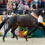 Trakehner Champion Stallion 2014 Sir Sansibar.