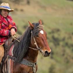 Wild horse showdown to prove Kaimanawas are 'more than bush ponies'