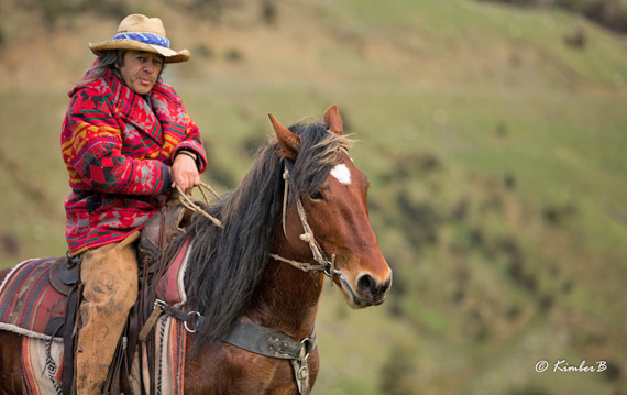 Tommy Waara, pictured on his Kaimanawa, is one of the trainers taking part in the Kaimanawa Stallion Challenge.