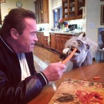 My little pony: Meet Arnold Schwarzenegger's Whiskey!