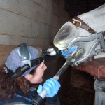 Vet body clarifies equine dentistry options