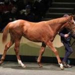 The Frankel-Finsceal Beo filly who fetched €1.8 million.