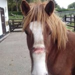 Lucky is making an excellent recovery and will soon be rehomed by the charity.