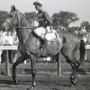 Legendary racehorse, sire Native Dancer honored