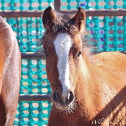 Better data crucial in improving the lot of wild horses, says advocate
