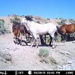 American wild horse advocates seek freeze on roundups