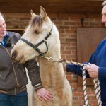 Charlotte Shepherd has provided Star with a loving new home. The pair are pictured with World Horse Welfare field officer Nick White. Photos: World Horse Welfare