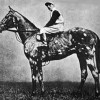The Tetrarch and jockey Steve Donoghue in 1913.