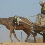 Working animals are crucial to the livelihoods of an estimated 600 million people. Photo: The Brooke