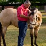 Scratching that itch: Here's the rub over horse training