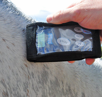 A new form to record any microchip irregularities that may affect identification of the horse has been made available by the FEI.
