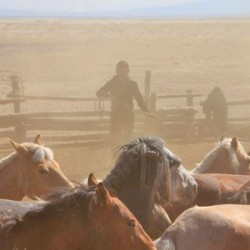 Researchers identify the genetic footprint of horse domestication