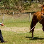 Teach your horse to relax