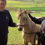 Field officers Nick White with Star, following the youngster's impressive recovery. Photo: World Horse Welfare