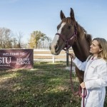 Erin Venable, assistant professor of equine science, with Cupid, one of Southern Illinois University Carbondale's cannulated horses. Photo: Russell Bailey/Southern Illinois University