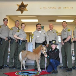 Miniature horse becomes new face of policing in Los Angeles County