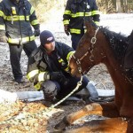 Poor Bob was unable to get back on his feet without help. Photos: Wrentham Fire Dept/Facebook