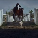 "The stars of the latest Budweiser commercial. Image: Budweiser ""Lost Dog"" commercial"
