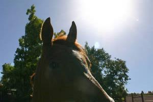 Long, hot summer: Keeping horses happy when drought hits