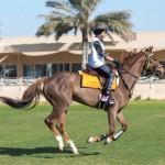 The run in to the finish line at Dubai International Endurance City.