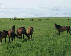 Food for thought: Review explores rangeland grazing