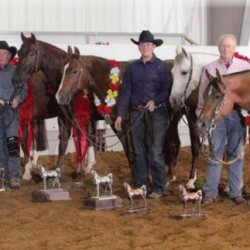 "Arabian registration cancelled for winning Quarter horse ""ring-ins"""