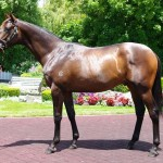 Melbourne trainer Peter Moody paid $470,000 for the More Than Ready-Lovetrista colt at Karaka yesterday.