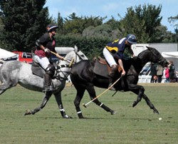Polo study finds helmet appearance outranks safety in buying decisions