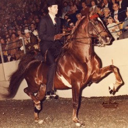 Saddlebred legend Redd Crabtree dies at 79