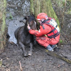Fire crews haul mare to safety from British bog