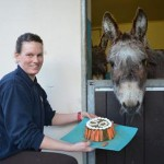 Tessa got a special cake and plenty of birthday cards as she marked for 50th birthday at The Donkey Sanctuary. Photo: The Donkey Sanctuary