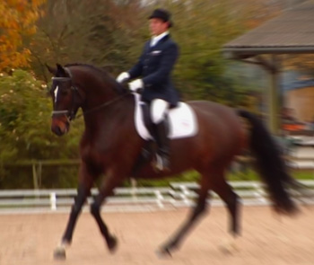Magic happens when horse and rider are in harmony.