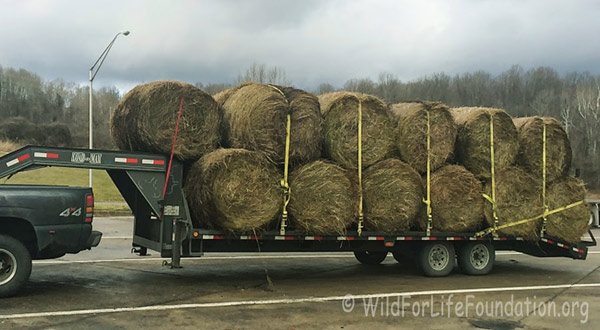 An East Coast hay producer donated 80 round bales for the Wild For Life Foundation's hay drive.