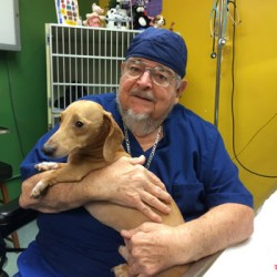 'Patron saint of pets' honored: vet chalks up 54 years of service