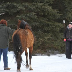 Rescue groups help in removal of five horses from Michigan property