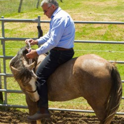 The equine vs. human point of view – which do you use?
