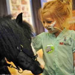 Therapy horse is short on size, but big on Magic