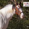 Hall of fame honors for 10 US horses