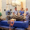 Long hospital stay sees Zippy the zebra back on his feet