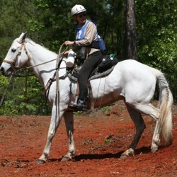Hall of Fame honor for leading trail horse Swiss Mocha