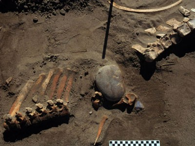 Horses hunted in North America 13,300 years ago, research shows