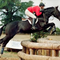 Leading eventing sire Jumbo dies at 31